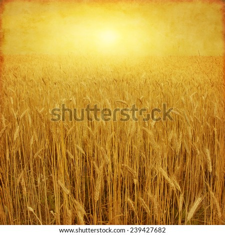 Wheat field at sunset in grunge and retro style. - stock photo