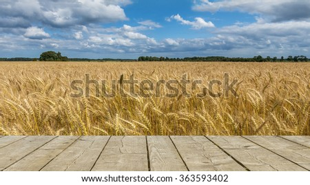Wheat field by summer day - stock photo