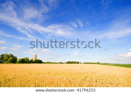 Wheat field in a farm in Central Indiana - stock photo