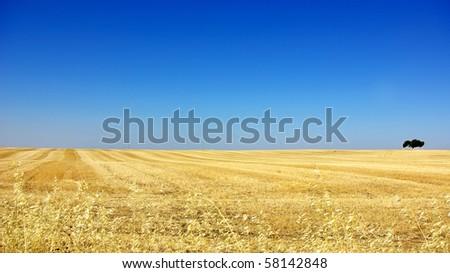 Wheat field in alentejo, Portugal. - stock photo