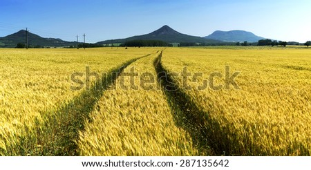 Wheat field in summer time, Hungary - stock photo