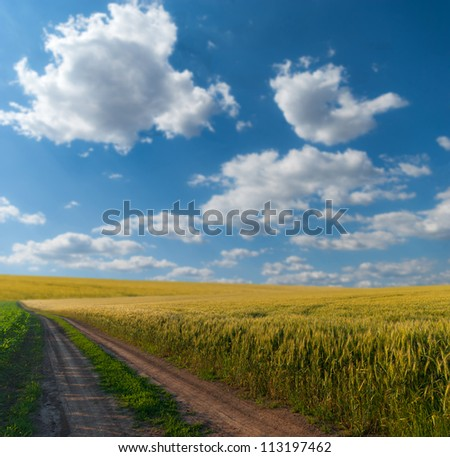 Wheat field on a background beautiful sky