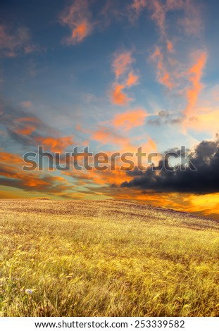 wheat field under a scenic sky at sunset