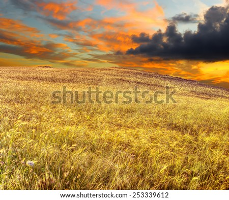 wheat field under a scenic sky at sunset - stock photo