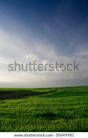 Wheat field with blue sky - stock photo