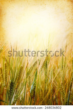 Wheat field with empty copy-space and frame for your text - agricultural and food concept in retro style. Paper texture background with a cereal field. - stock photo