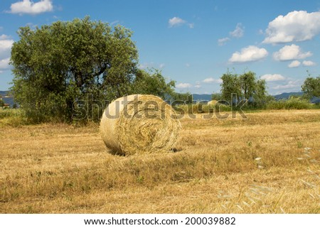 Wheat field with hay of bales - stock photo