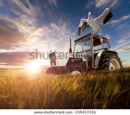 Wheat  fields, exotic birds and tractor.Rural travel concept  - stock photo
