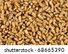 Wheat germs background - stock photo