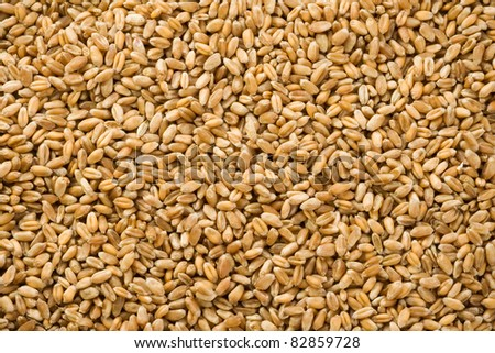 wheat grain as background texture