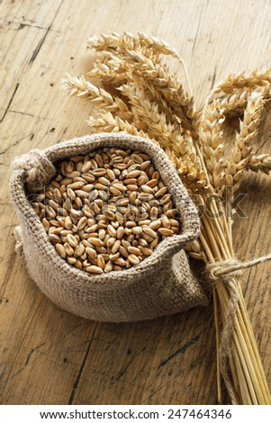 Wheat grain in small canvas sacks - stock photo