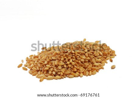 wheat grain is isolated on a white background
