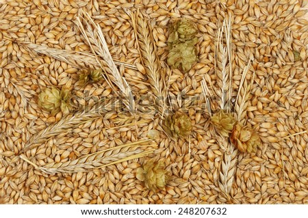 Wheat grains and ears of wheat with hops - stock photo