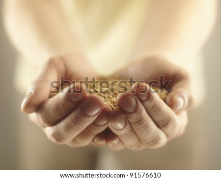 Wheat grains in the male hands. Harvest concept - stock photo