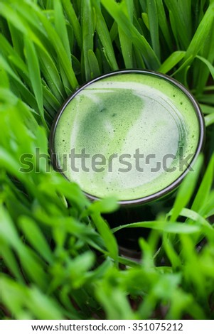 Wheat grass for juicing and healthy life. How to grow the best wheatgrass - Urban cultivation - stock photo