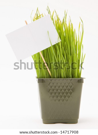 Wheat grass in a pot with a blank sign