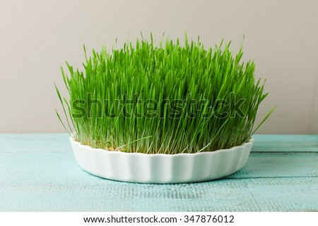 Wheat grass on a wooden kitchen table for juicing and healthy life. How to grow the best wheat grass - Urban cultivation  and gardening. - stock photo
