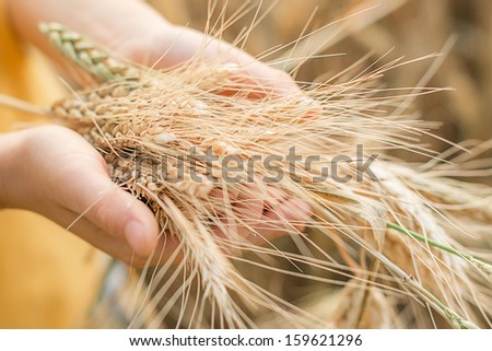 Wheat in a hands - stock photo