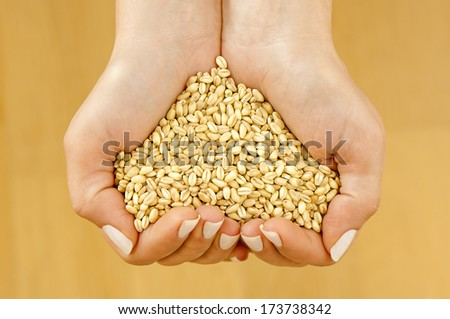Wheat in woman's hands forming heart shape