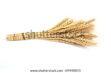 wheat isolated on white - stock photo
