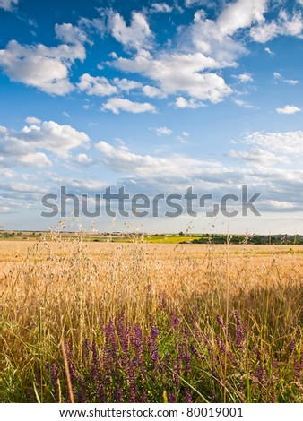 wheat land background - stock photo