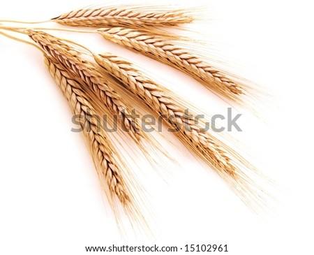 Wheat on a white background - stock photo