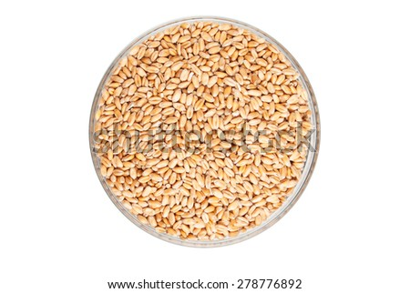 Wheat seeds in a bowl - stock photo