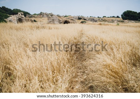 wheat spikelets with Tomb of the Kings on background, Paphos in Cyprus