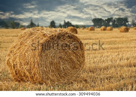 Wheat straw rolls on the field at sunset - stock photo