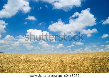 Wheaten field and the dark sky - stock photo