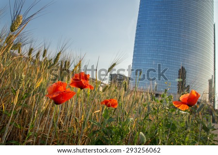 Wheatfield land in Milan - stock photo