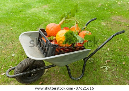 Wheelbarrow full of freshly harvested pumpkins is standing on the grass - stock photo