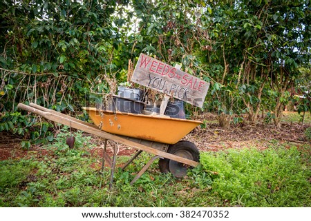 Wheelbarrow in garden with comical sign selling weeds - stock photo