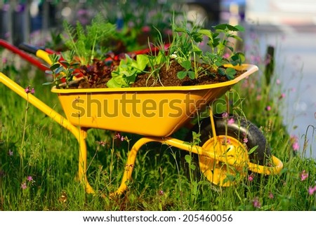 Wheelbarrow planted with different herbs & vegetables - stock photo