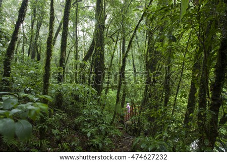 When the falling rain in the green forest make a fog fill mood background on the mountain in national park of Thailand