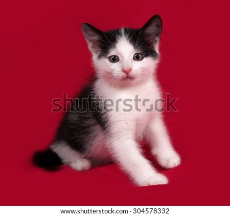 White and black kitten sitting on red background