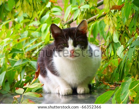 White and black stray cat looking at the watcher - stock photo