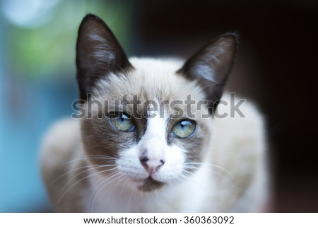 White and brown Cat  - stock photo