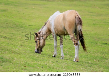White and brown horse stand in pasture in countryside