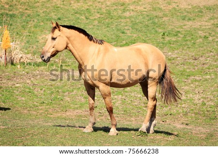 White and brown Horses in the green Nature - stock photo