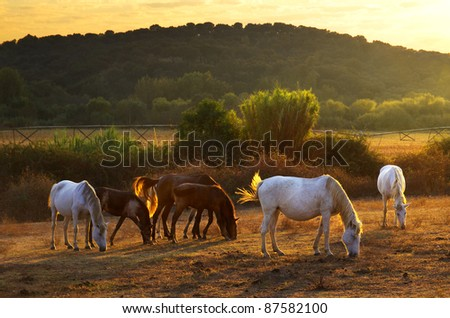 White and brown horses pasturing in the countryside at sunset - stock photo