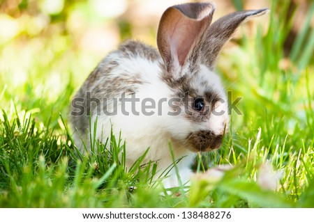White and brown rabbit sitting in grass, smiling at camera - stock photo