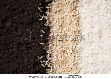 White and brown rice lay next to each other on a bed of dirt.