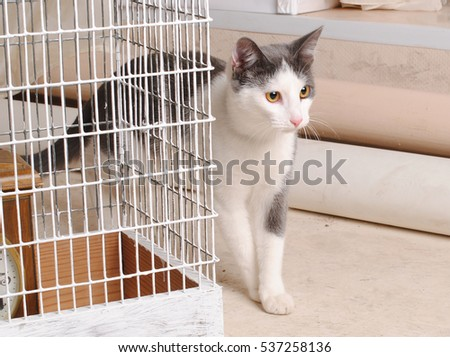 White and gray cat and a bird cage. Watchmen and hunts