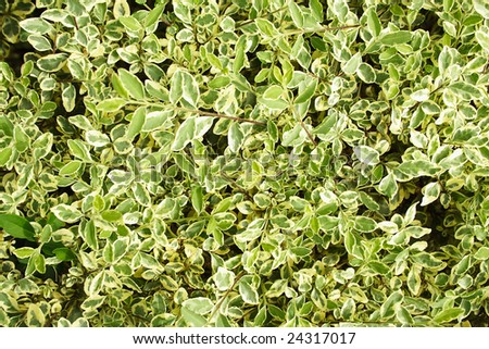 White and green leaves background. - stock photo