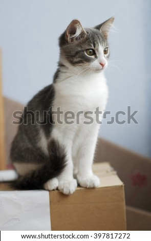 White and grey little kitty cat looking in balcony window in summer day - stock photo