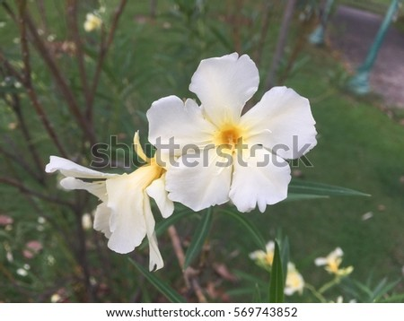 White pale yellow flowers green background stock photo safe to use white and pale yellow flowers in the green background mightylinksfo