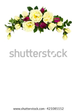 White and red roses (Burnet double white, shrub rose) on a white background with space for text - stock photo