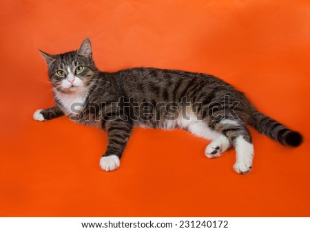 White and striped spotted cat lies on orange background - stock photo