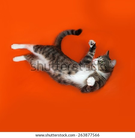 White and striped spotted cat plays on orange  - stock photo